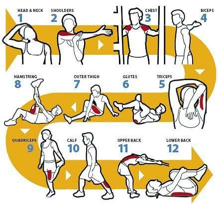 The 12 best stretches Follow a stretching routine to maximise the benefits of training and to minimise muscle stiffness and risk of injuries: read more at https://www.facebook.com/texila.digipedia
