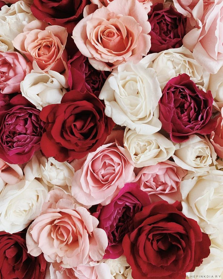 Image result for roses pinterest