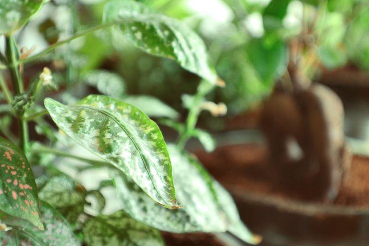 Plantas de interior, maceteros de botellas, diseño con plantas