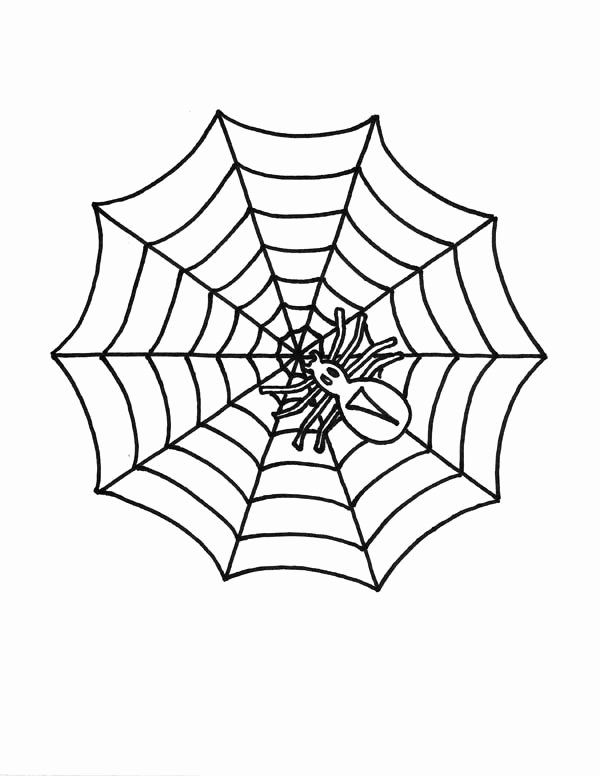 Spider Web Coloring Page Unique Little Spider Spider Web Coloring Page Color Luna Spider Coloring Page Coloring Pages Spider Web Drawing