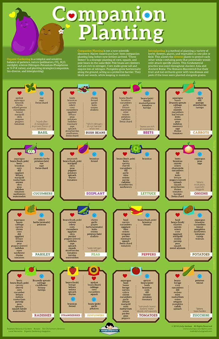 25 best ideas about companion planting guide on pinterest companion planting chart companion - Companion planting ...