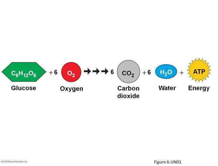 Free Worksheets chemical equation review worksheet : Pinterest u2022 The worldu2019s catalog of ideas