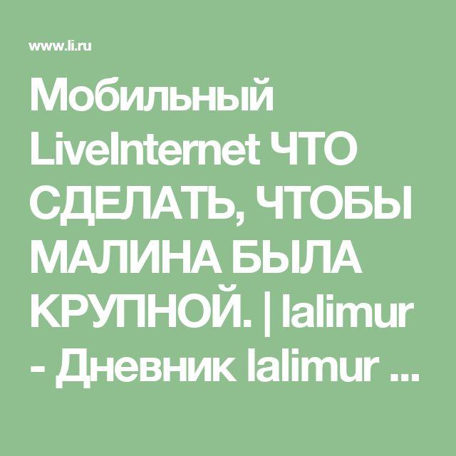 Мобильный LiveInternet ЧТО СДЕЛАТЬ, ЧТОБЫ МАЛИНА БЫЛА КРУПНОЙ. | lalimur - Дневник lalimur (Марина Манукова) |