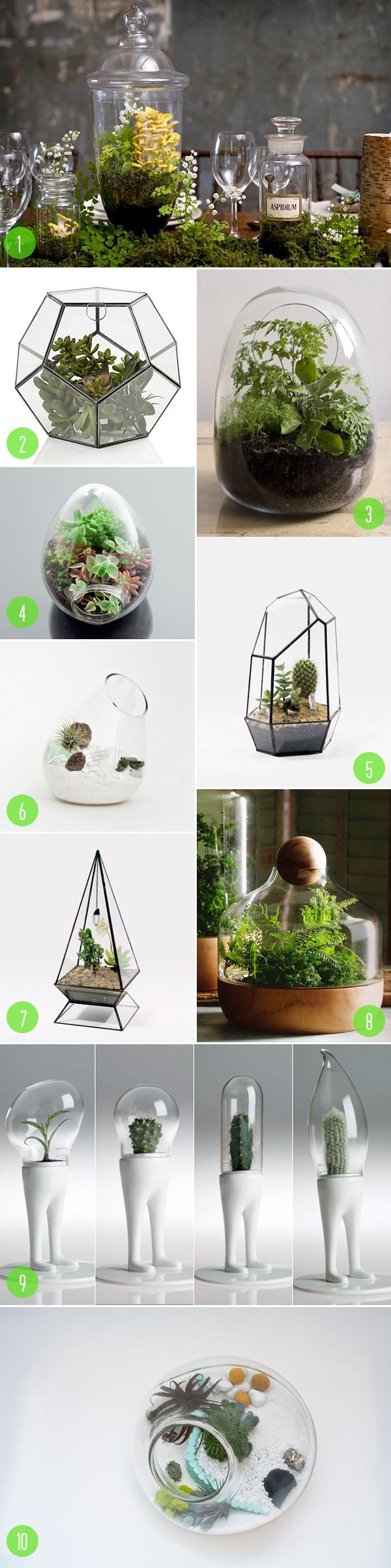top 10: terrariums