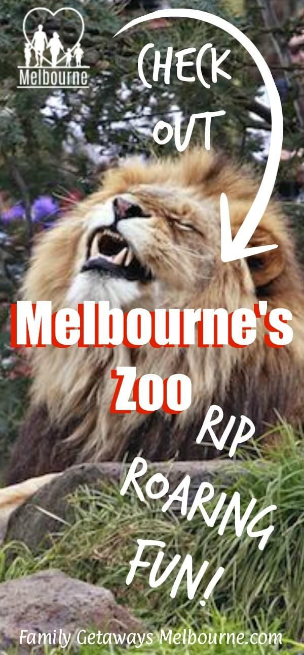 What's your favorite Melbourne Zoo Exhibit? Have you checked all the animals out as yet? Click this image for more information.