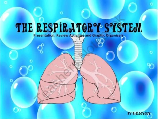 Respiratoryanatomy Power Point: 166 Best Images About Human Body Systems On Pinterest