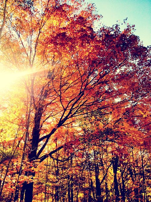 Autumn. A large stand of trees changing color, with the sunlight enhancing the golden colors. | #MyNewFallEdit