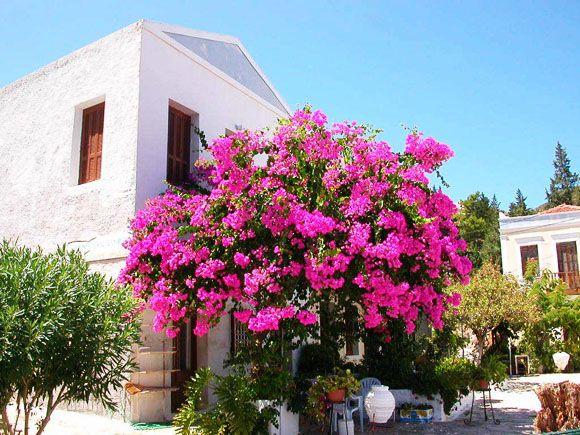 House and flower, Kastelorizo