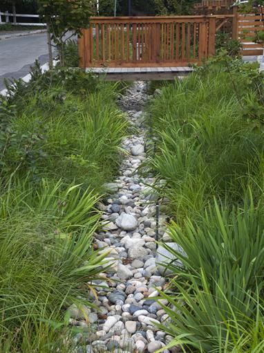Engineered bioswale that filters out debris and pollutants from rain collection before entering the storm system   seven35