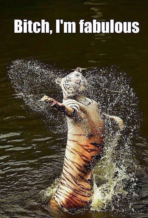 Basically #Tiger #Funny #Quote #Bitch #Im #Fabulous