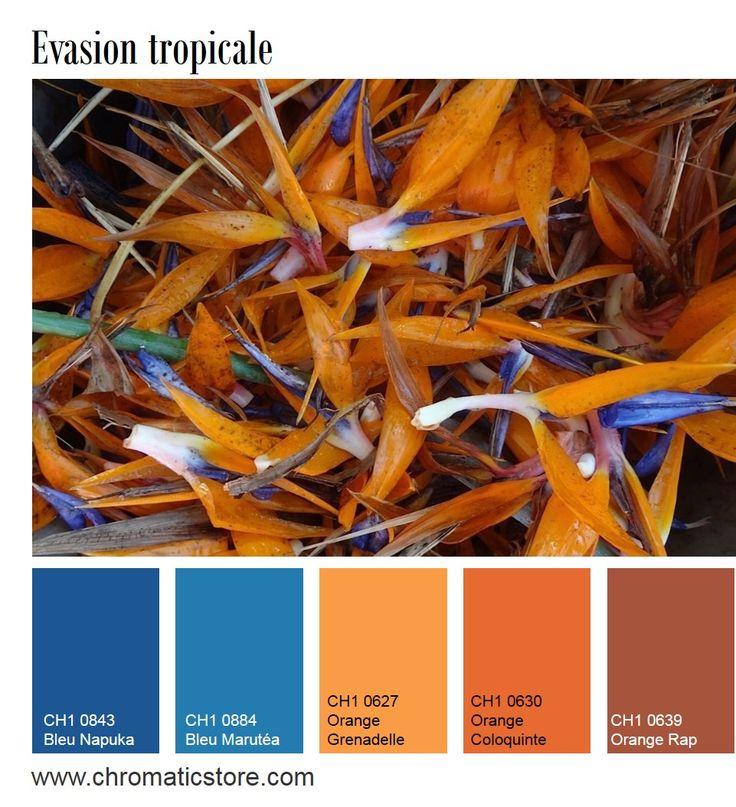 Le Bleu Et Le Orange Sont Des Teintes Compl Mentaires Et