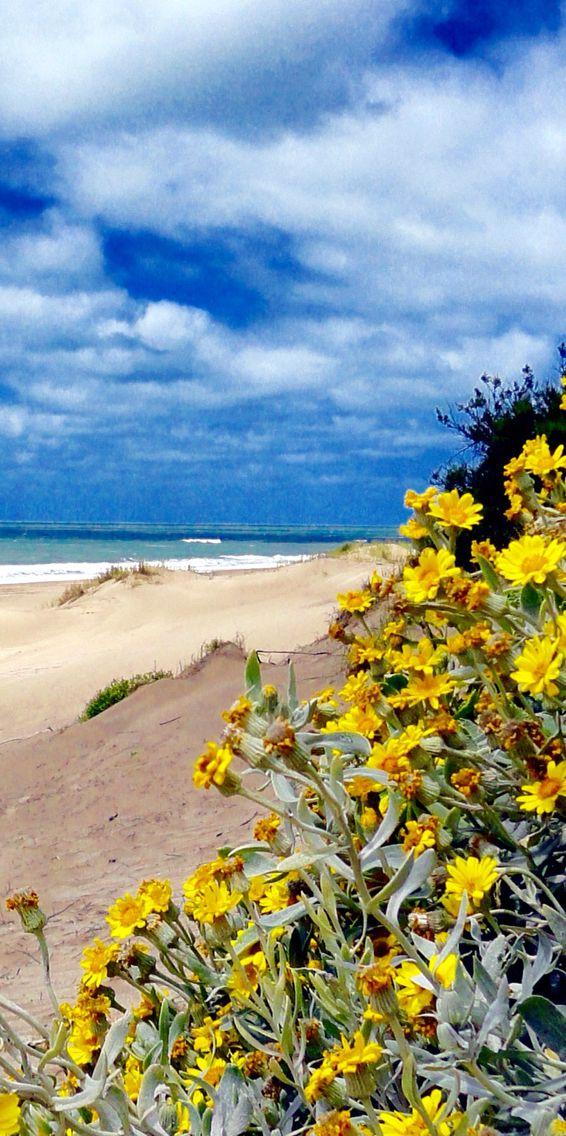 Playa de Mar de las Pampas