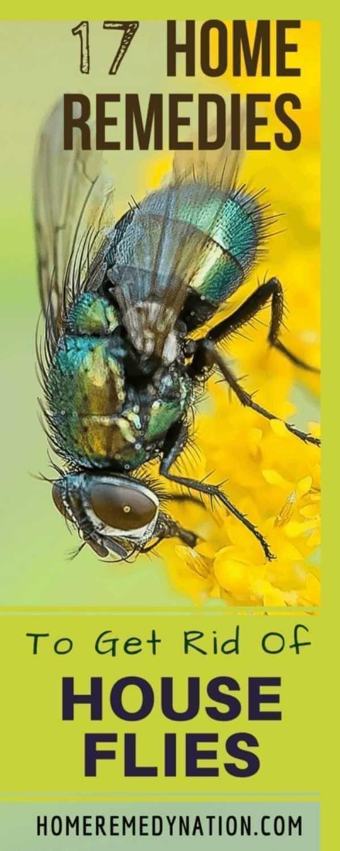 f677c1fb41d27b0f0927ed4494162590 - How To Get Rid Of Green Flies In The House