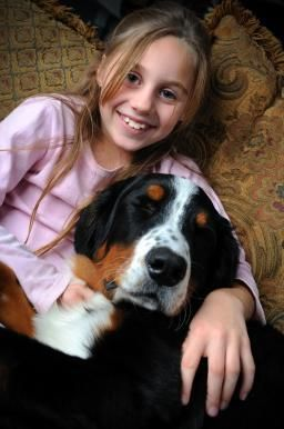 Bernese Mountain Dog Breed: Information, Facts and Pictures | Pets World