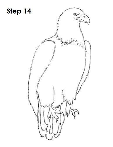 how to draw an eagle body