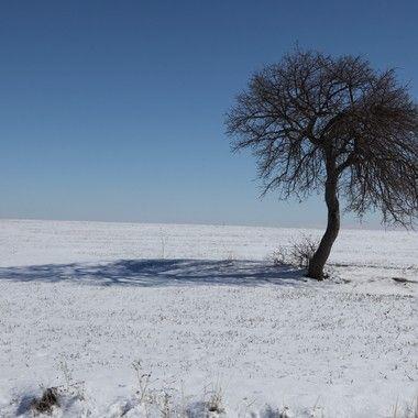 Yalnız ağaç ..