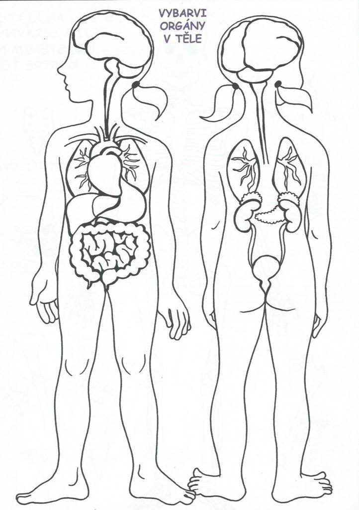 Vybarvi orgány v těle