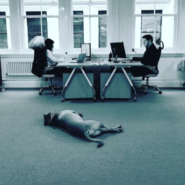 Last week saw our newest member of the team join us... with questionable work ethic...