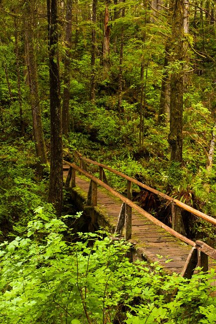 Ozette Trail, Olympic National Park, Washington (WA), USA