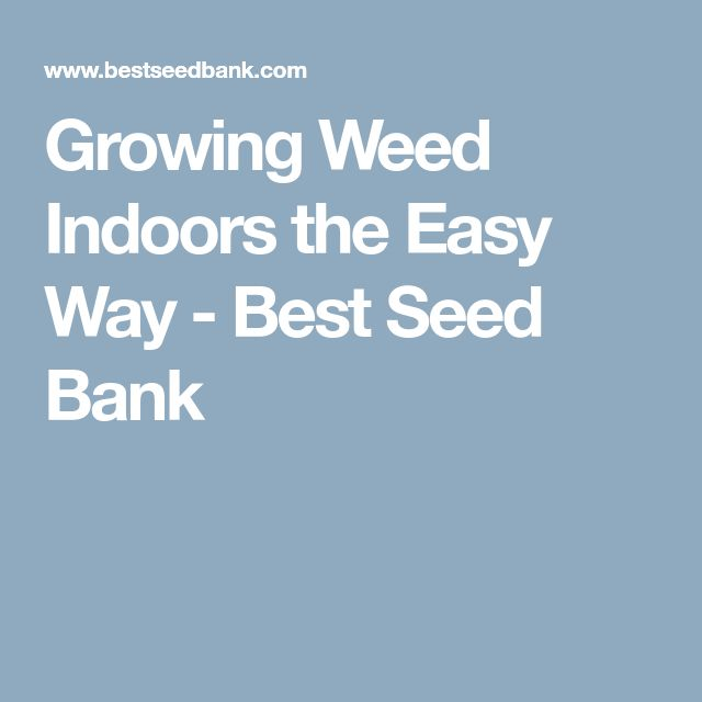 Growing Weed Indoors the Easy Way - Best Seed Bank