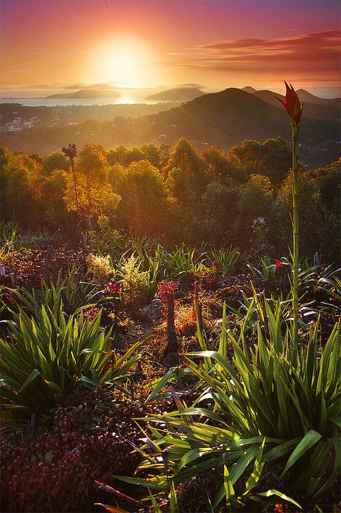 Port Stephens, Australia by Rhys Pope