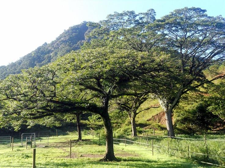Les plantes de la Nouvelle Calédonie