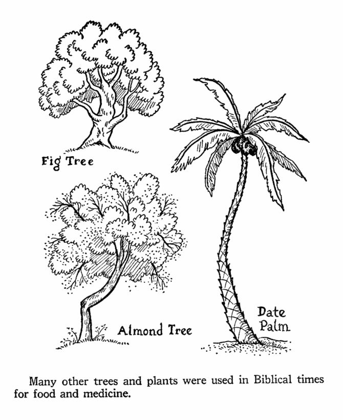 bible life and times coloring pages biblical trees