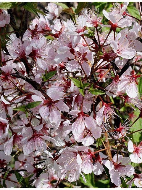 24 best native iowa plants images on pinterest