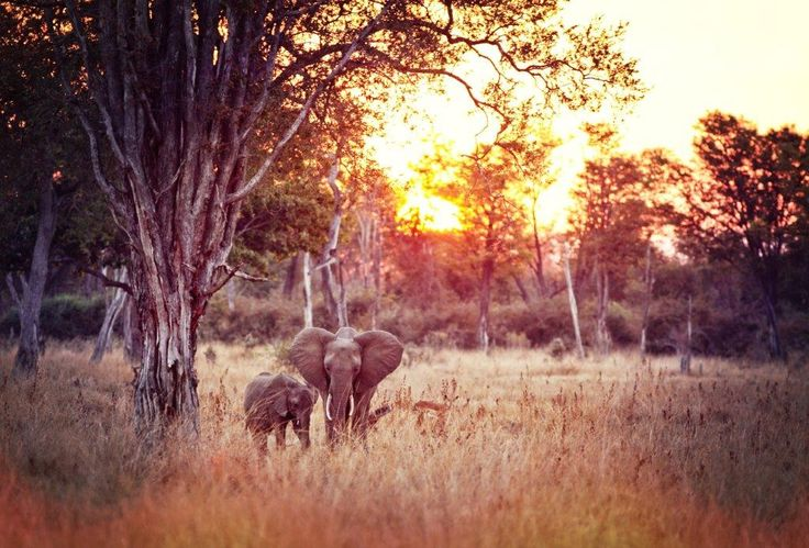 African sunset with mom and baby elephant on a game drive in the Kruger National…