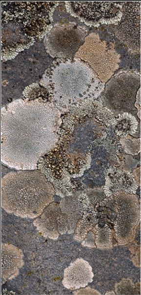 Lichen...I was told that if your trees have it on them that it was an indicator…