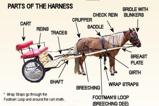 b>harness</b> pieces <b>parts</b> the <b>harness</b> driving bridle
