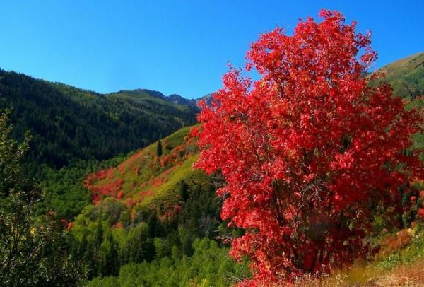 19 best images about top trees to plant in durango and sw colorado on pinterest