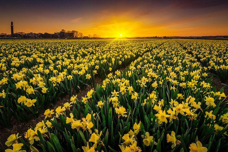 Sunset, Netherlands