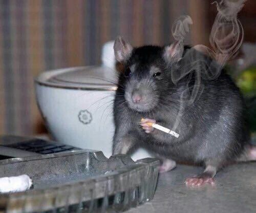 "melissa on Twitter: """"Ratatouille? haven't heard that name in years.""…"