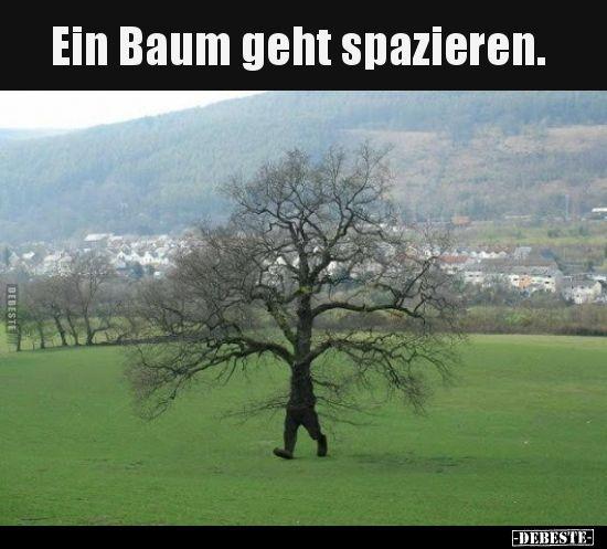 Ein Baum geht spazieren…   Lustige Bilder, Sprüche, Witze, echt lustig