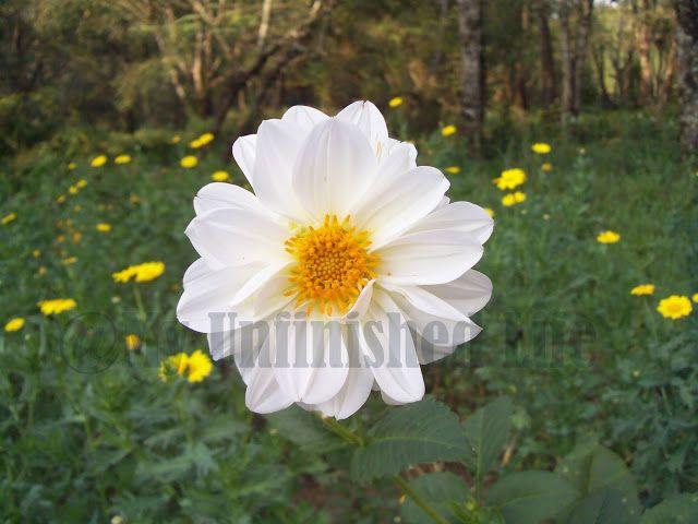 My Unfinished Life: Flowers in Munnar (Kerala) India ~ Magical Memories of Nature in Munnar