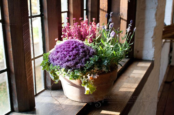 Autumnal wedding flowers: lavender, ornamental cabbage and heathers. Rustic, garden table centre planted in a terracotta pot.