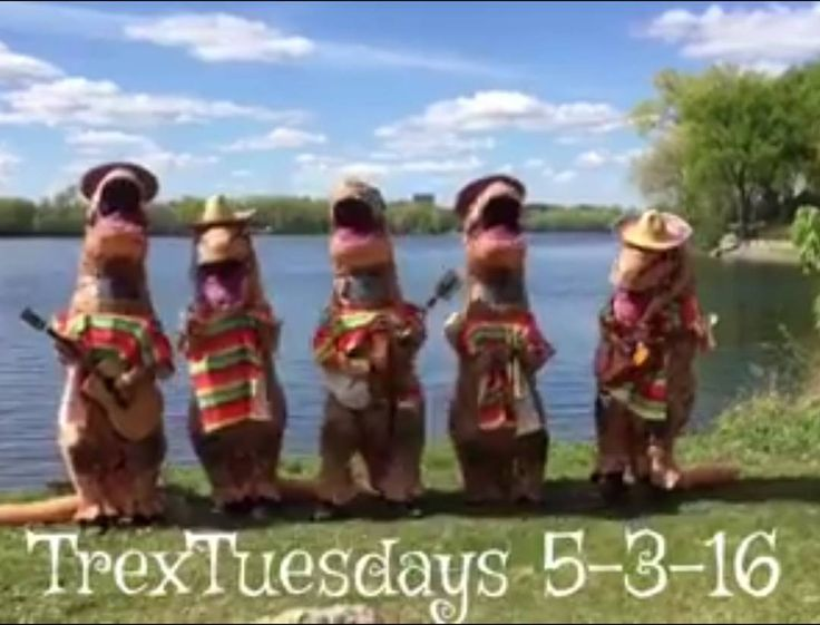 Happy Cinco de T-rex!! https://m.facebook.com/story.php?story_fbid=1480057242025192&id=1053993564631564  Contact us at 585-482-8780 for more information or check out select costumes and accessories on our website www.arlenescostumes.com  #trex #jurassicworld #inflatablecostume #inflatable #rubies #familyreunion #corporate #fundraiser #graduationparties  #trextuesdays #cincodemayo #cincodetrex