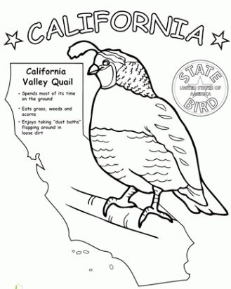 417 best Art--Coloring Pages \ Designs images on Pinterest Animal - new free coloring pages quail