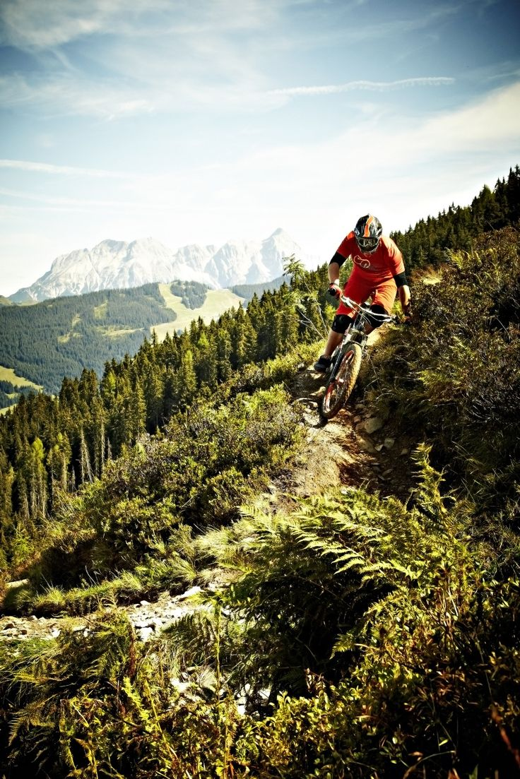 9 Best Images About Mountain Biking On Pinterest Trees North