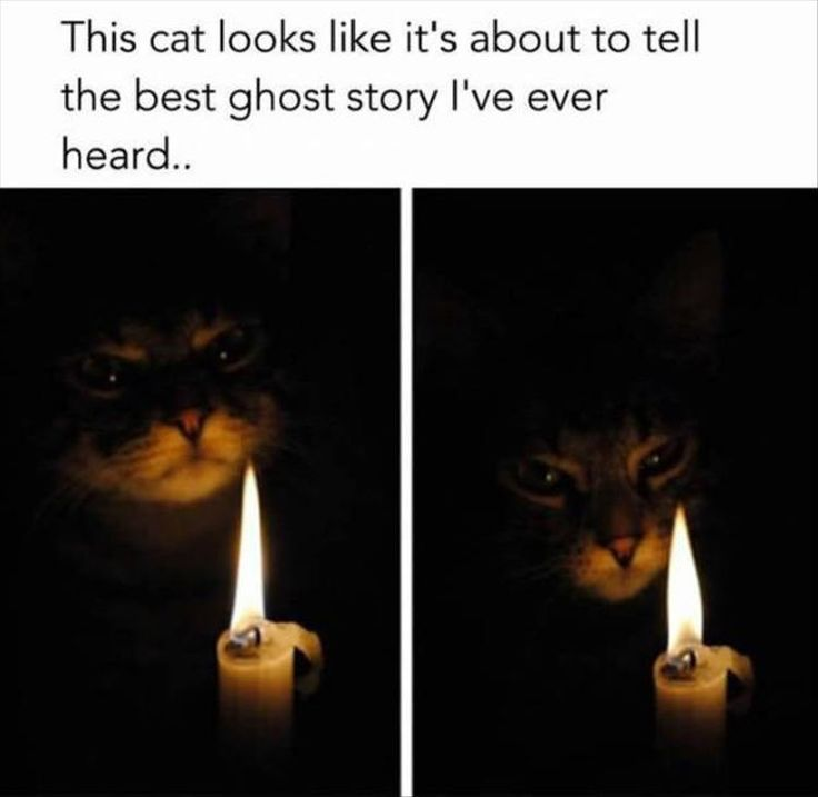 This cat looks like it's about to tell the best ghost story I've ever heard