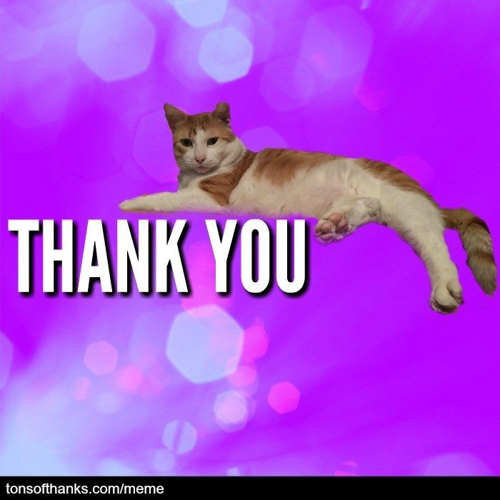 51 Nice Thank You Memes With Cats Thank You Memes Cute Love Memes Thank You Cat Meme
