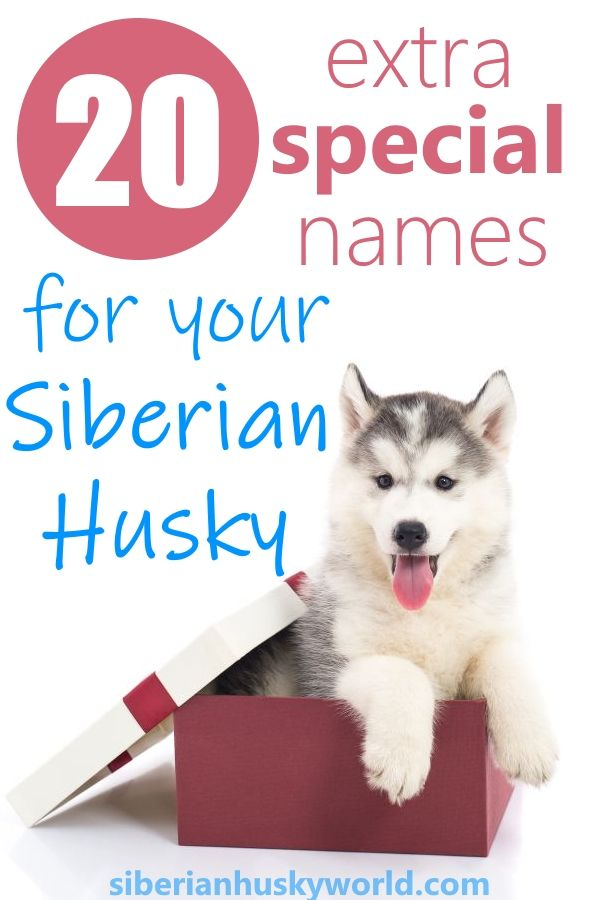 We Ve Chosen 20 Perfect Names For Siberian Huskies Now All You