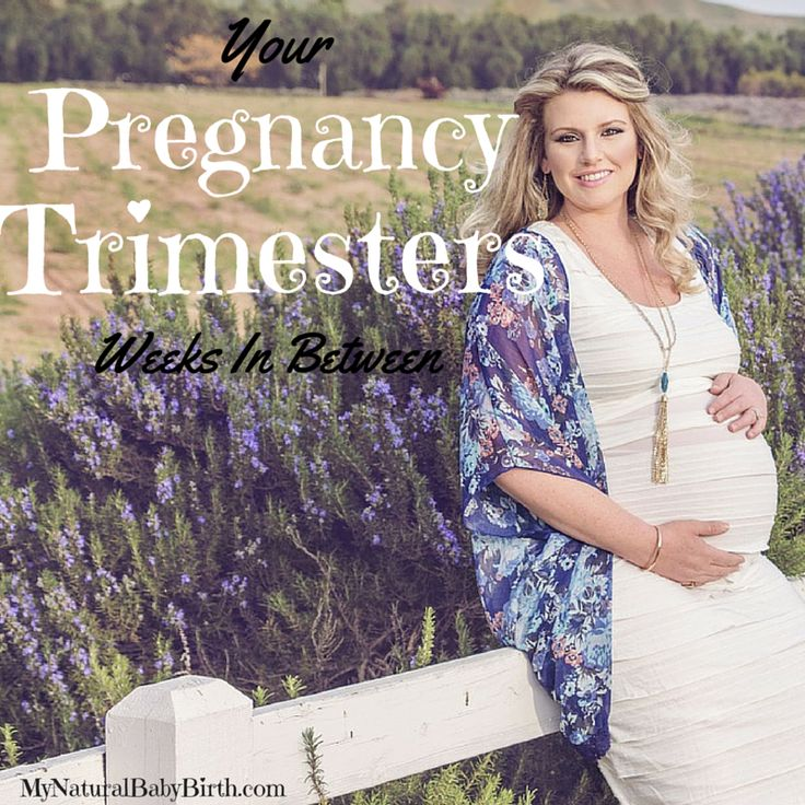I think the pregnancy trimesters are pretty well known by most. But I'll recap them before you watch the neat videos below.  Pregnancy Trimesters - Weeks Too I like to say: First is the Worst, Next is Best, Third is Absurd--hopefully for obvious reasons. The First Trimesteris often considered the hardest for women because of morning sickness and extreme exhaustion. And for good reason! So much change is happening in a very short amount of time that it takes three to four months for ...