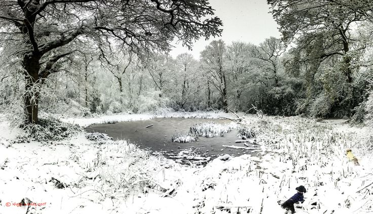 Dogs in the snow - Iphone panorama