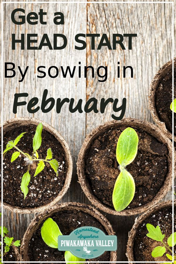 What to Plant in your Winter Vegetable Garden in February (or August!) – Homesteading and Gardening