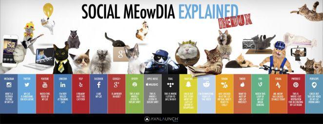[Infografica] I Social Media spiegati dai gatti | Vincenzo Dell'Olio