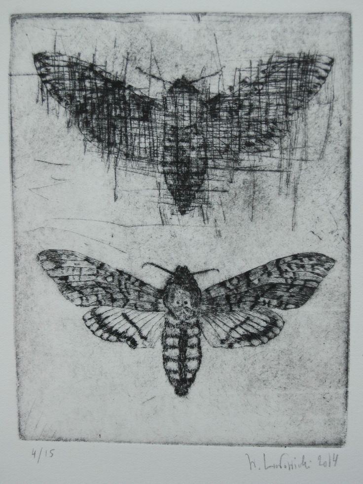 Death`s head hawkmoth drypoint etching
