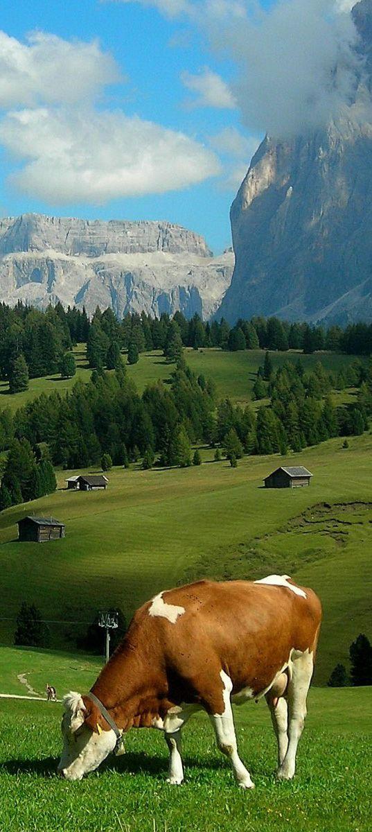 Alpes suizos.                                                       …
