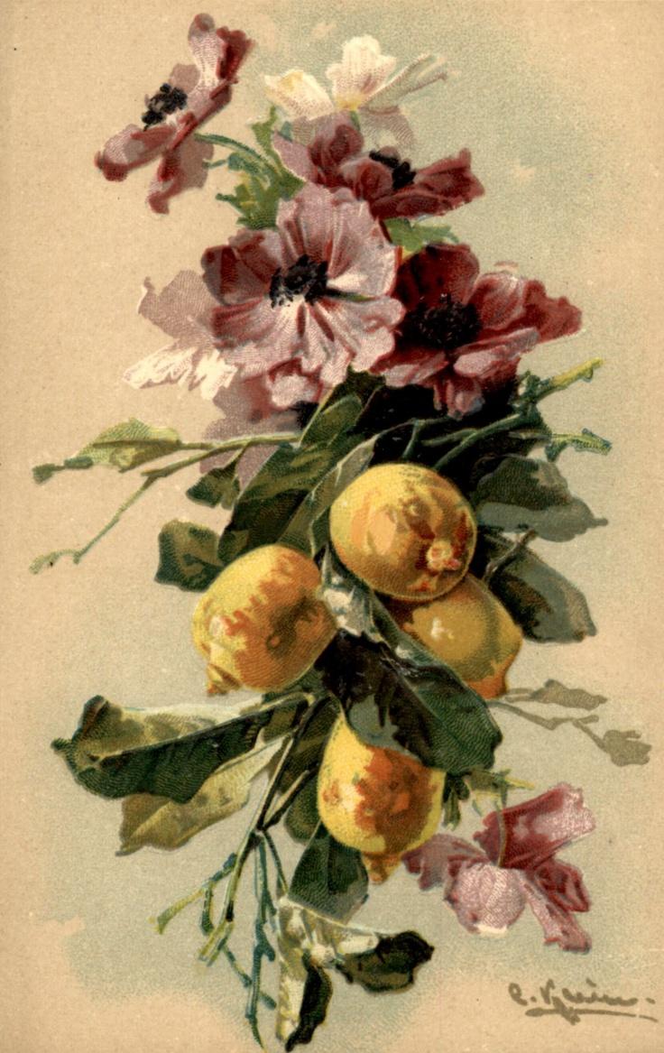 Картинки, старинные открытки яблоки и цветы